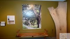 black-oak-bench-small-