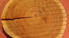 three-reasons-to-use-quarter-sawn-wood-1
